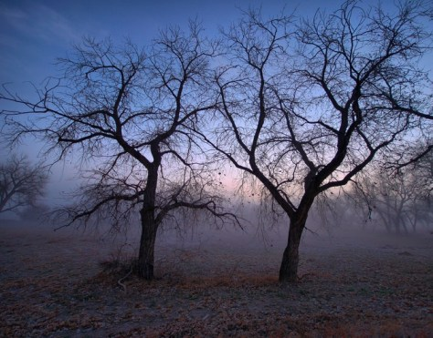 Trees in the fog-Challenge image