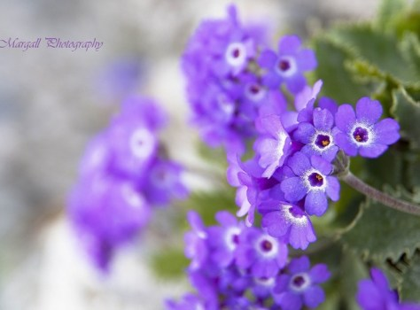 the beauty of mountain flowers