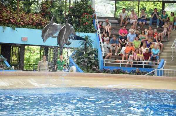 Brookfield Zoo Dolphin Show 118