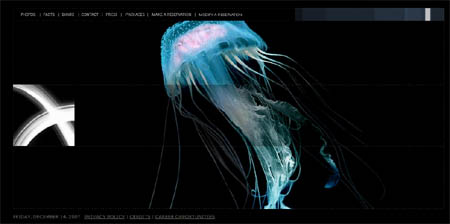hotel-victor-website-jellyfish.jpg