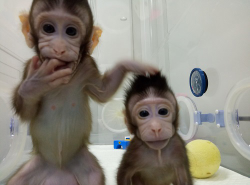 "Newborn clones Zhong Zhong and Hua Hua are named after the Chinese adjective ""Zhōnghuá"", meaning ""Chinese nation""."