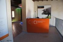 Museos del jamón y del cerdo