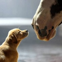 """More #BestBud """"Puppy Love"""" Budweiser Commercial gif"""