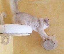 Serie Volare - Cuccetta da parete - gattino vanitoso