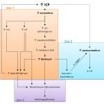 Cushingreflexen som kan ses vid ökat intrakraniellt tryck, t ex vid hjärnblödning. T5.