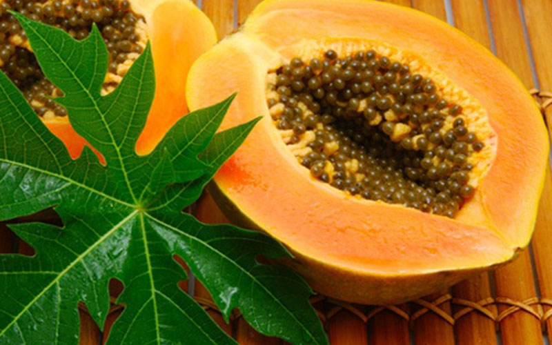 papaya costa rica, medicinal, medicinal plants
