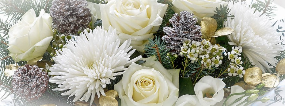 Winter & Christmas Flowers