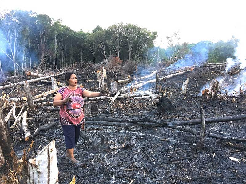 Borneo  Island Devastated  People Oblivious     Countercurrents From Indonesian Borneo  Kalimantan   She was just standing there  in the  middle of burning land  surrounded by stumps of trees  fire everywhere
