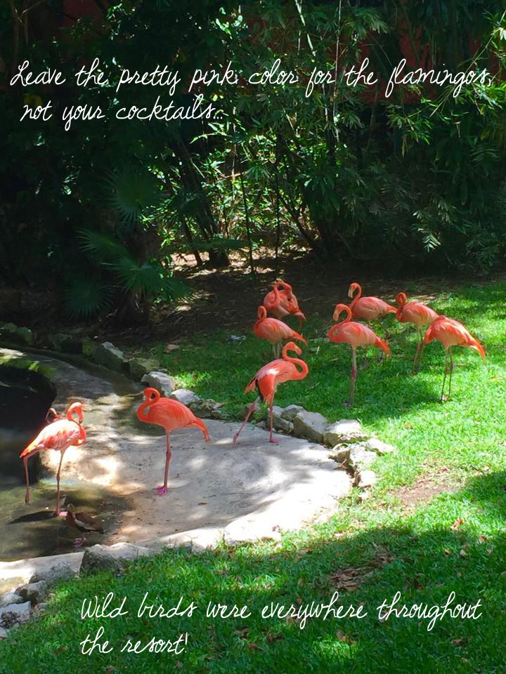 Flamingos not cocktails