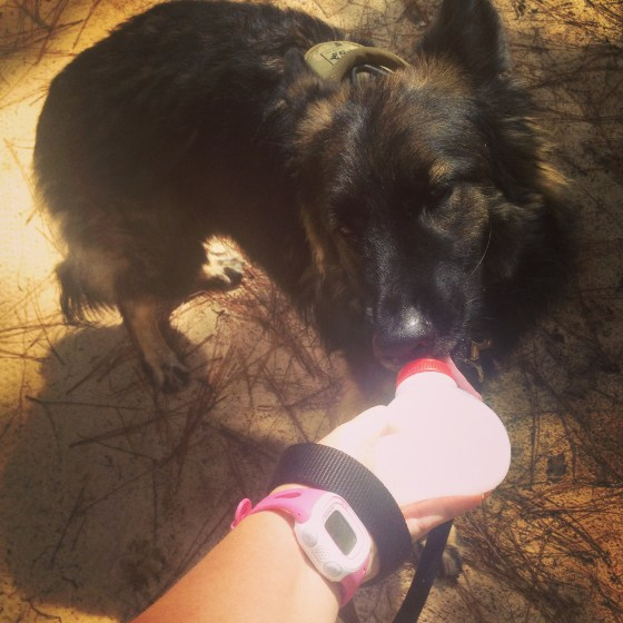 Running with your Dog | Country Girl Gourmet