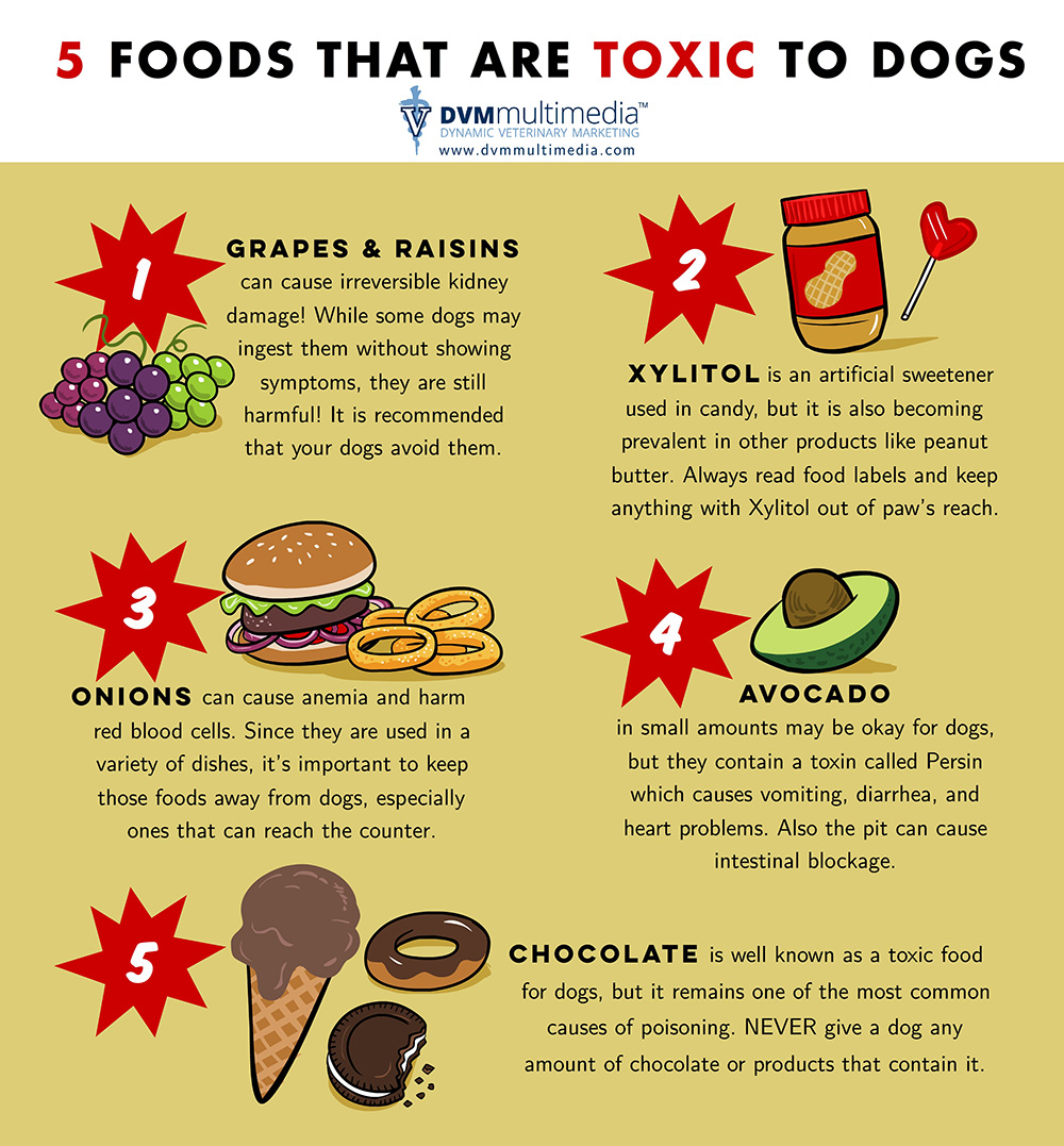 Serene Wi Countryside Animal Hospital Foods That Are Toxic To Dogs Foods That Are Toxic To Dogs Dogs Health Dogs Good Or Bad Avocado Wi Countryside Animal Avocado bark post Avocado For Dogs