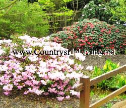 Декоративные кустарники: фото и названия. Цветущие морозостойкие деревья и кустарники для дачи и сада