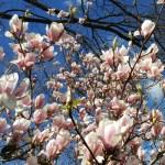 Мой сад в марте