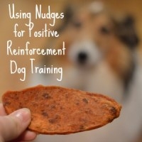 #ad Using Nudges for Positive Reinforcement Dog Training #NudgesMoments #Shop #cbias
