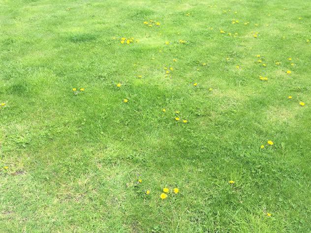 Crawley Gardener | Gardeners Services In Crawley | Gardeners Crawley