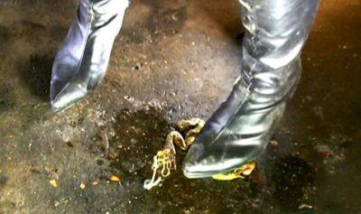 履き込んだ黒ブーツは激クサ!悪臭漂う黒ブーツでカエルを凄惨クラッシュ!