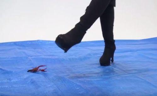 ザリガニカーリング!ブルーシート上を滑るザリガニを蹴り飛ばす!