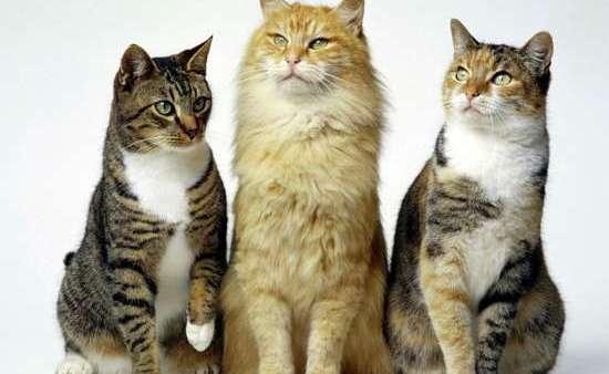 Ao contrário dos cães, gatos são animais mais susceptíveis a infecções respiratórias.