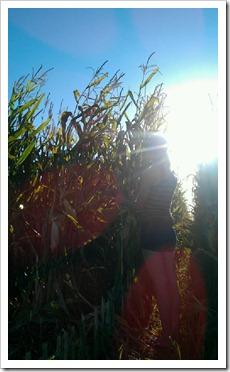 Checking the Corn