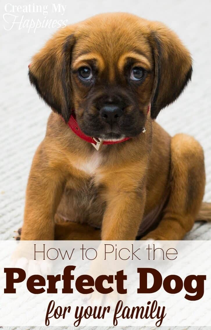 Dark Your Family New Dog Breeds 2017 Uk New Dog Breeds Added To Akc When We Set Out To Bring A New Dog Into Our Re Were A How To Pick Dog bark post New Dog Breeds