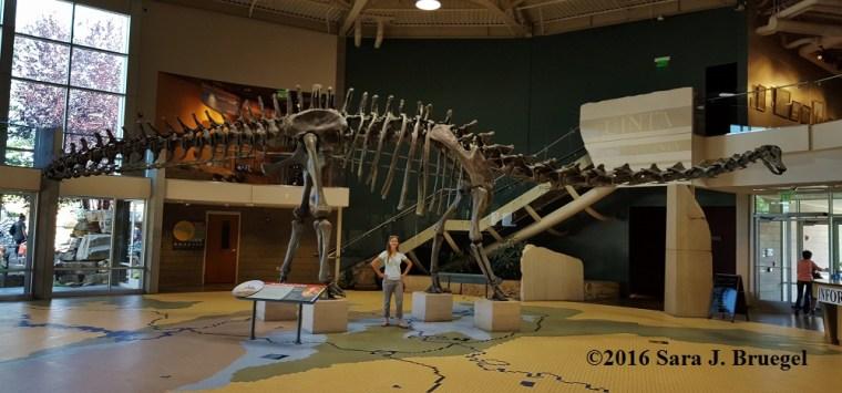 The author under a diplodocus (Type of sauropod) display in Utah. Photo copyright Sara J. Bruegel, 2016