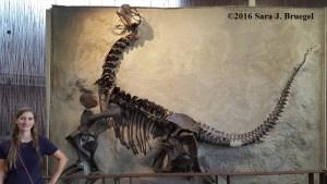 Camarasaurus replica at Dinosaur National Monument