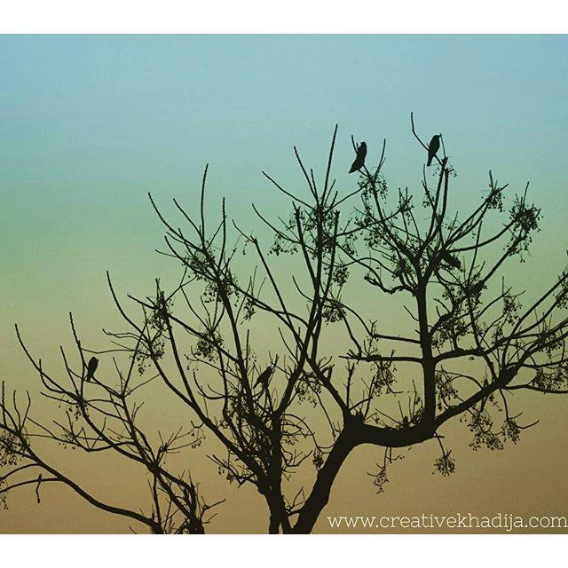 http://i2.wp.com/creativekhadija.com/wp-content/uploads/2016/03/creativekhadija-photography-clicks.jpg?resize=640%2C640