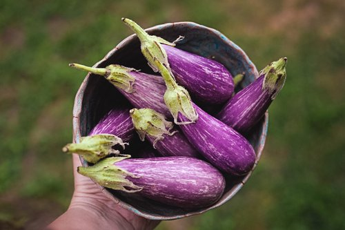 My vegetable garden produced these six beautiful eggplants.