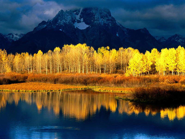 The Quaking Aspens