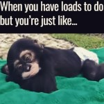 lazy monkey chilling
