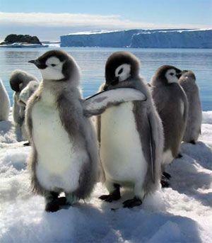 pinguini din antarctica