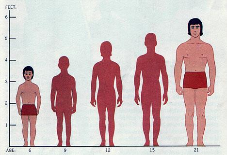 average_height