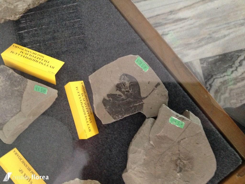 muzeul de mineralogie 12