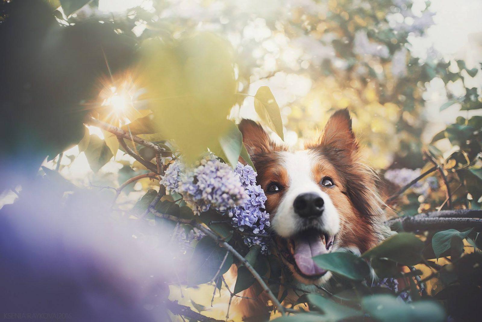 Elegant Longest Living Dogs Longest Living Dogs Breeds Archives Critter Longest Living Dogs Diet Longest Living Dog Breed Large bark post Longest Living Dogs
