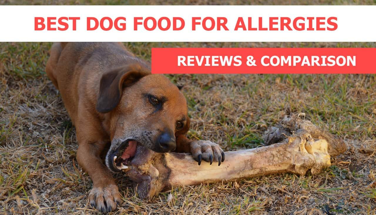 Fullsize Of Best Dogs For Allergies
