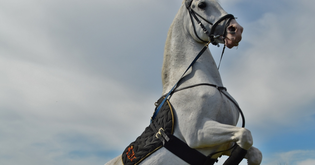 Childhood Dreams: Seeing the Lipizzaner Stallions Perform in Essex, MA
