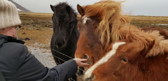 That Time I Lost My Mind Over Icelandic Horses