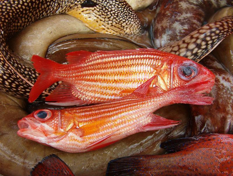 market fish cape verde via flickr