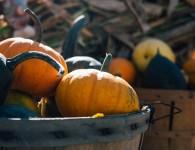 pumpkin-1031292_640