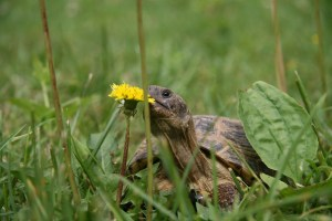 tortoise with flower