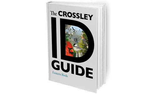 The-Crossley-ID-Guide_Eastern_Birds_Featured