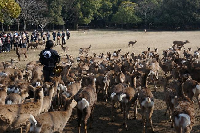 kyoto-nara-deer
