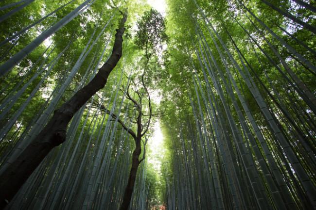 kyoto-arashiyama-bridge