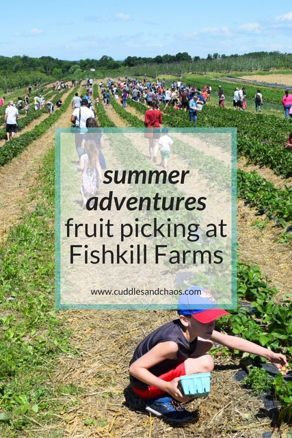 Summer Adventures | fruit picking at Fishkill Farms #hudsonvalley
