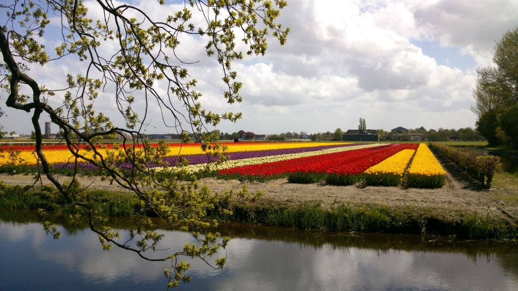 Colorful fields of flowers, Netherlands