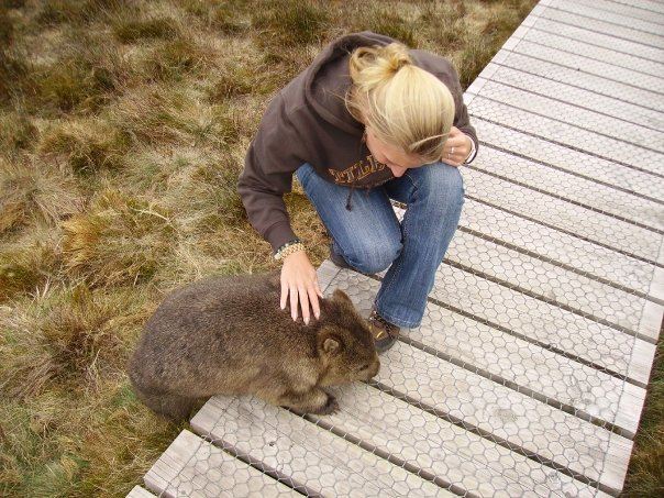 Curious wombat playing with my shoe in Tasmania