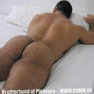 arse-big-hairy-bear