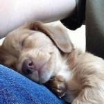 飼い主を枕にして熟睡!甘えん坊のペットたちの寝姿が可愛い!