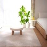 一人暮らしにオススメな観葉植物4選♥