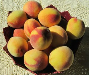 just picked peaches